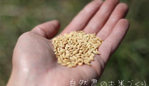 お米づくりスタート