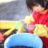 苗を育てる土づくり