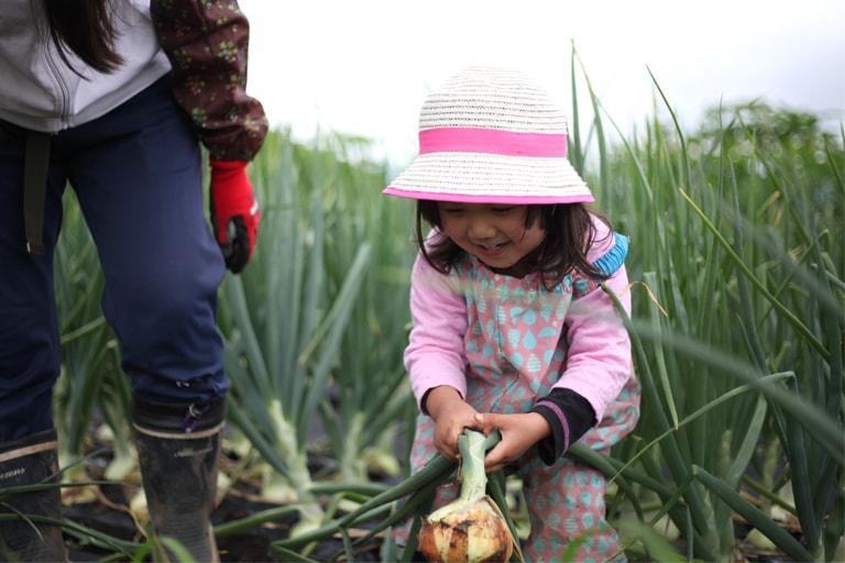玉ねぎ収穫04