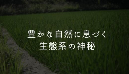 【実はあまり知られていない】自然栽培の水田に広がる光景とは?