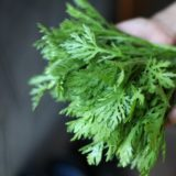 サラダ春菊の美味しい食べ方