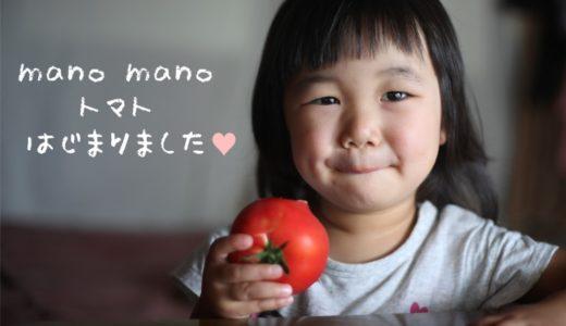 野菜セットにトマトが仲間入り